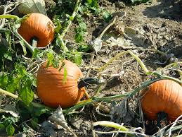 Boyd Tx Pumpkin Patch by Arbor Day Farm Nebraska City Nebraska Dinner With Kathy