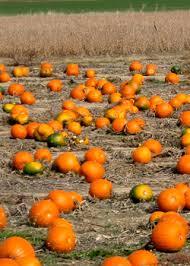 Best Pumpkin Patch Madison Wi by Best Pumpkin Patches In Detroit Cbs Detroit