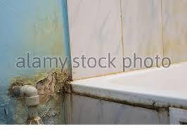 schwarzer schimmel wächst auf duschfliesen im badezimmer