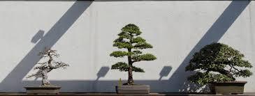 bonsai baum kaufen stellt euch zuerst diese 5 fragen