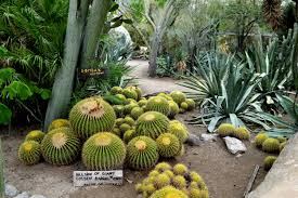In s Moorten Botanical Garden