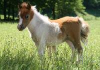 combien coute un cheval miniature plus petit que poney miniature