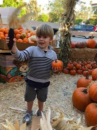 Pumpkin Patch Pasadena Area by The Grimmest Pumpkin Patch In Los Angeles Hipster Mother