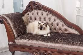 cat sofa exclusive handcrafted cat sofa from felineva made to order