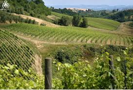 Invest In Wine Vineyard And Olive Grove Tuscany Farmland