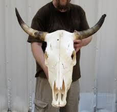 Decorated Cow Skulls Pinterest cow skulls for pearson metal art larry pearson polished stainless