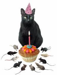 blackcat bday