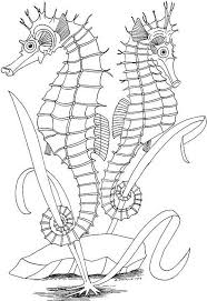 Two Seahorses Color Page Animal Coloring Pages For Kids Thousands Of Free Printable