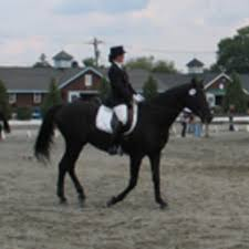 Teach Your Horse To Be Really Responsive Dressage Today