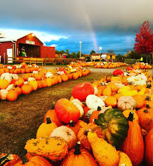 Sand Mountain Pumpkin Patch by Roba Family Farms Roba Family Farms Fall Attractions