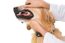 Pumpkin Causes Dog Diarrhea by And Intestinal Ulcers In Dogs Symptoms Causes Diagnosis