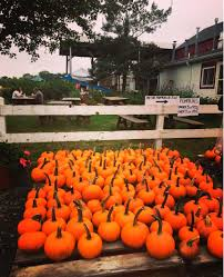 Pumpkin Picking Nj by 7 New Jersey Apple Orchards U0026 Pumpkin Patches Near Hoboken And