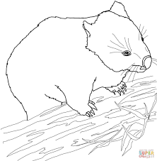 Click The Australian Wombat Coloring Pages To View Printable