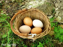 Bad Eggs Do They Float Or Sink by The Float Test How Old Is That Egg Easy Test For Freshness