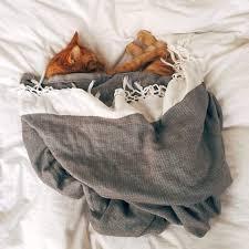 warum katzen und hunde gerne im bett schlafen 5 pros