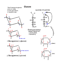 Chair Conformations Axial And Equatorial by Glucose 2 Gif