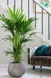 schöne wohnzimmer blumen zimmerpflanzen dekor