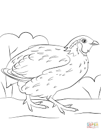 Click The Bobwhite Quail Coloring