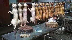 cuisiner pour chien du chien dans l assiette une tradition ancestrale critiquée en