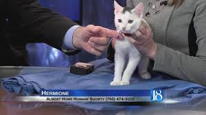 Hermione the Cat Pet of the Week for Dec 4