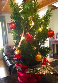 Ace Hardware Christmas Trees by Where Do I Cut A Christmas Tree In Winter Park Colorado Visit