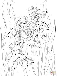 Click The Realistic Leafy Seadragon Coloring Pages