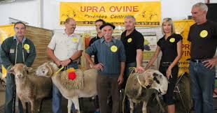 chambre d agriculture haute garonne chambre d agriculture haute garonne 12 montr233jeau lupra ovine