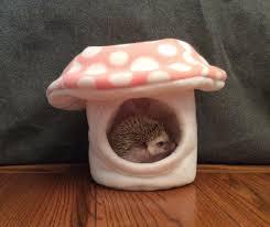 best 25 pet heating pad ideas on pinterest congratulations pics