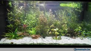 lot de plantes aquarium hygrophila polysperma a vendre