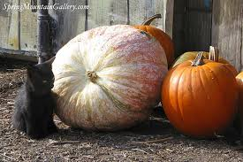 Half Moon Bay Pumpkin Patches 2015 by Pumpkin Fields U0026 Activities Visit Half Moon Bay