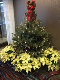 Christmas Tree Shop Williston Vt by Company News Vermont Landscaping Design Installation