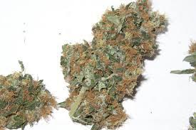 die marihuanablüten produktiv ernten marihuana ernte
