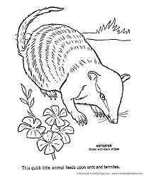 Aardvark Wild Animal Coloring Page