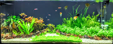 Planted Tank Two Islands By Andrei Dumitrescu - Aquarium Design ... Adrie Baumann And Aquascaping Aqua Rebell Natural Httpwwwokeanosgrombgwpcoentuploads2012 Amazoncom Aquarium Plant Glass Pot Fish Tank Aquascape Everything About The Incredible Undwater Art Outstanding Saltwater Designs Photo Ideas Anubias Nana Petite Planted Freshwater Beautify Your Home With Unique For Large Fish Monstfishkeeperscom Scape Nature Stock 665323012