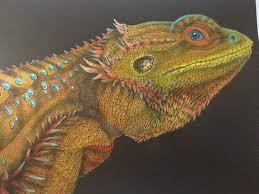 Bearded Dragon By Zaloena Ramirez