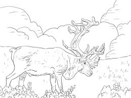 Click To See Printable Version Of Porcupine Caribou Or Grants Coloring Page