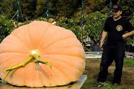 Boyd Tx Pumpkin Patch by Edinburg Great Pumpkin Wins Big Times Union