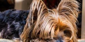 list of the least aggressive dog breeds onehowto