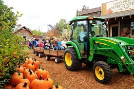 Pumpkin Patch Tampa 2014 by 7 Best Pumpkin Patches In Montana To Visit In 2016