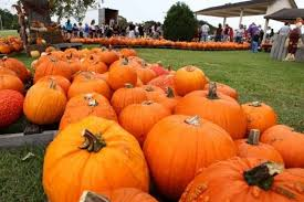 Pumpkin Patch Houston Tx Area by Deer Park United Methodist Church Releases October Schedule Of