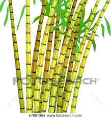 Clipart Of Plant Sugar Cane K7891354