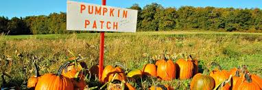 Denver Pumpkin Patch Corn Maze by Fangtastic Guide To Halloween Pumpkin Patches In Greenville Sc