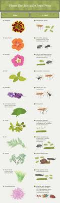 Best 25+ Repel Mosquitos Ideas On Pinterest | Bug Repelling Plants ... How To Keep Mosquitoes Away Geting Rid Of Five Tips For Getting Bugs And Pests On Your Patio Youtube To Get Chiggers Skin Body Yard Symptoms Fast Crawly Catures In My Backyard Alberta Home Gardening 25 Unique Rid Spiders Ideas Pinterest Kill Off Bug Control I Repellent Spiders Spider Spray Sprays Cutter 16 Oz Outdoor Foggerhg957044 The Of Time Tested Bob Vila Pictures With Japanese Beetles Garden Best Indoor Mosquito Killers Insect Cop