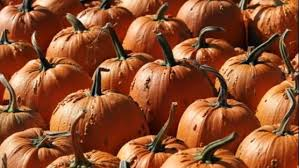Southern Ohio Pumpkin Patches by Trip To Pumpkin Patch Leaves Woman With Painful Infection From