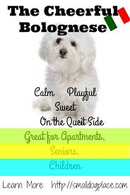 Shed Free Dogs Small by Best 10 Non Shedding Cats Ideas On Pinterest Non Shedding Dogs