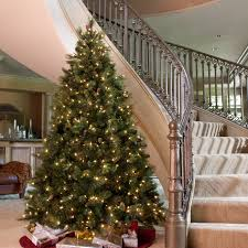 Artificial Fraser Fir Christmas Trees Uk by National Tree Pre Lit 7 1 2 U0027 Carolina Pine Hinged Artificial
