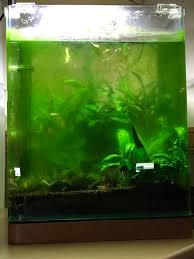 Aquascaping | Criptic Thoughts Photo Planted Axolotl Aquascape Tank Caudataorg Suitable Plants Aqua Rebell Tutorial Natures Chaos By James Findley The Making Aquascaping Aquarium Ideas From Aquatics Live 2012 Part 4 Youtube October 2010 Of The Month Ikebana Aquascaping World Public Search Preserveio Need Some Advice On My Planned Aquascape Forum 100 Cave Aquariums And Photography Setup Seriesroot A Tree Animalia Kingdom Show My Our Lovely 28l Continuity Video Gallery Green 90p Iwagumi Rock Garden Page 8