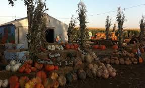 Pumpkin Patches Near Bakersfield Ca by R A M Farms Inc Corn Maze