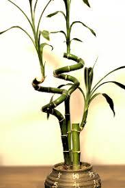 drei pflanzen fürs badezimmer pflanzen blumen kakteen