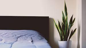 diese pflanzen sorgen für gute luft